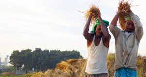 Transformation of Agriculture into a Dynamic Sector