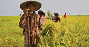 Bangladesh towards Sustainable Food Security